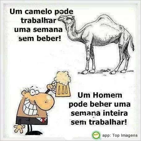 Diferença entre homem e camelo