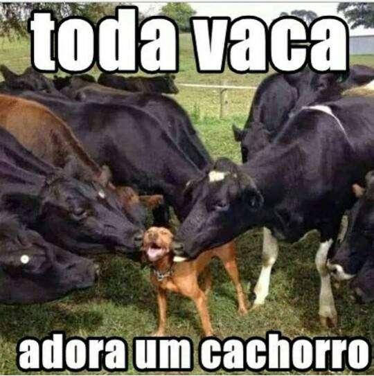 Toda vaca adora um cachorro