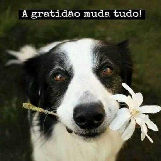 A gratidão muda tudo