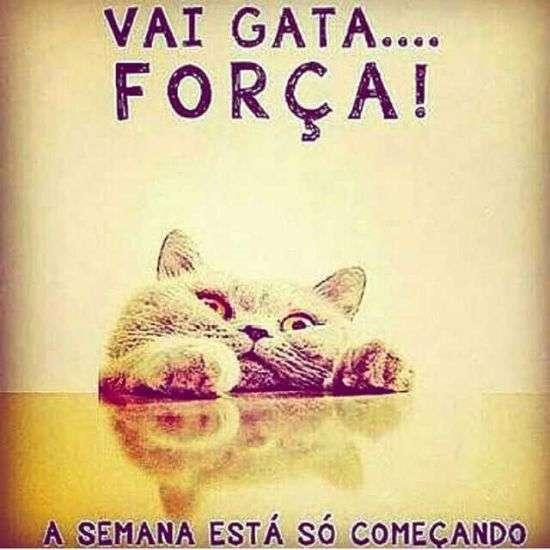 Força gata