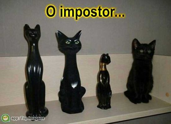 Gato impostor