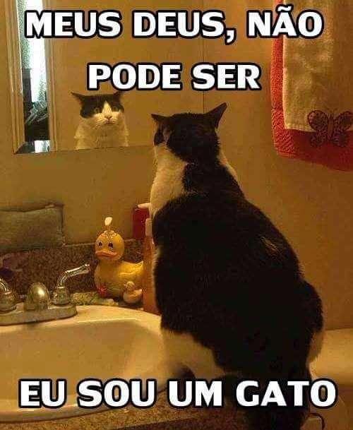 Sou um gato