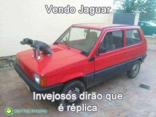 Vendendo jaguar