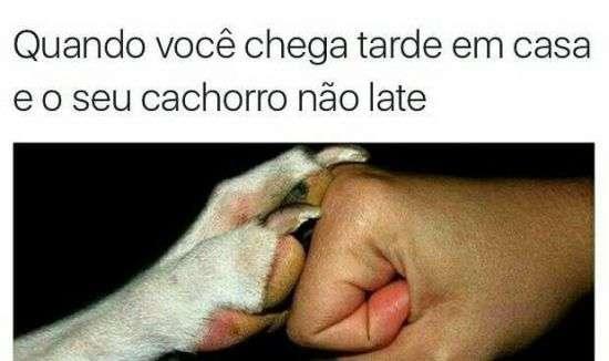 Cachorro companheiro