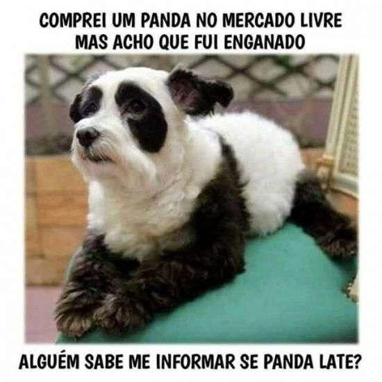Panda que late