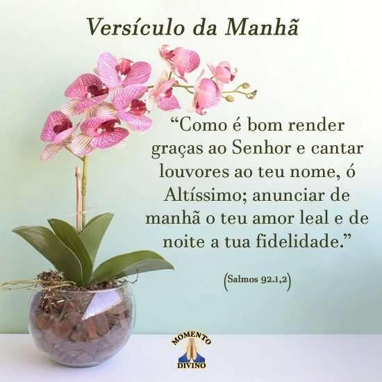 Versículo da manhã