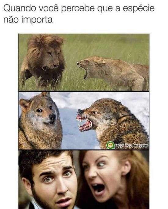 A espécie não importa