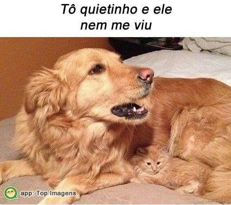 Gato camuflado