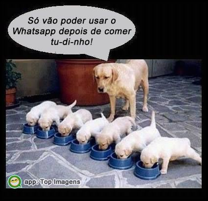 Whatsapp só depois de comer