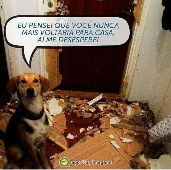 Cachorro desesperado