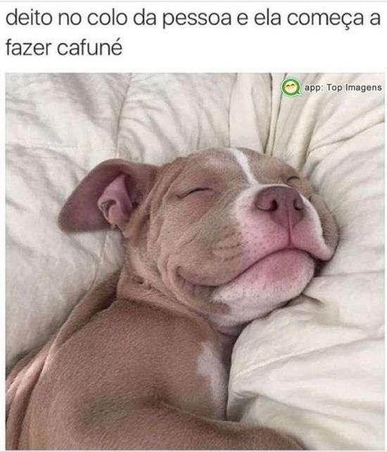 Cafuné é muito bom