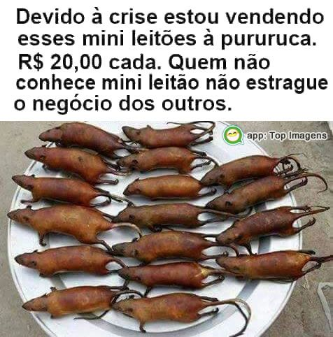 Vendo mini leitões