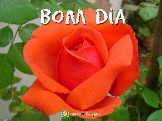 Bom dia