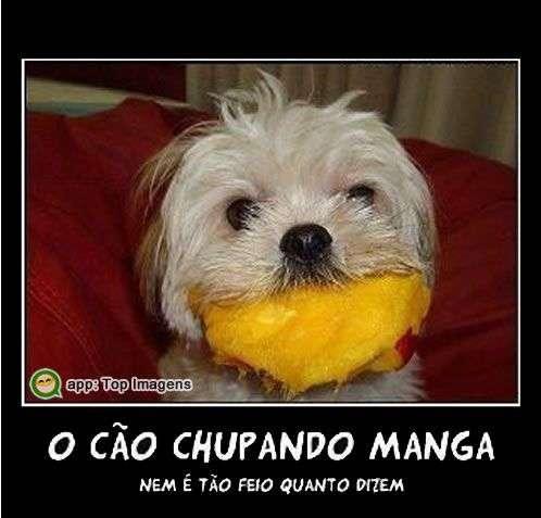 Cão chupando manga