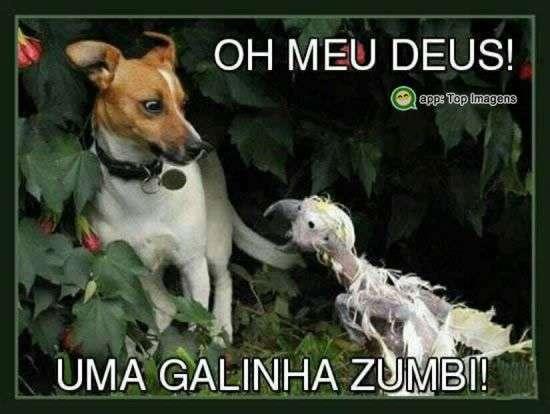 Galinha zumbi