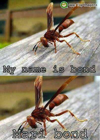 Meu nome é bond