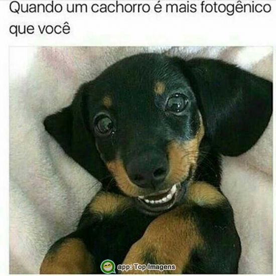 Cachorro fotogênico