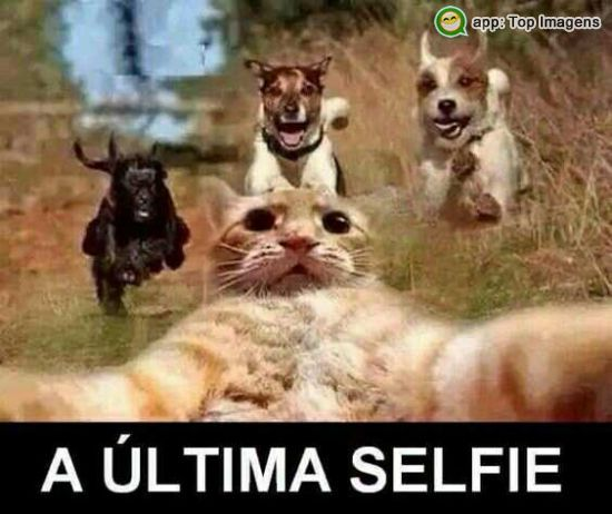 A última selfie