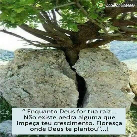 Enquanto Deus for tua raiz