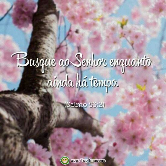 Busque ao Senhor