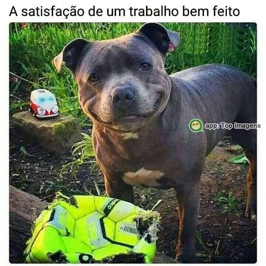 A satisfação do cachorro