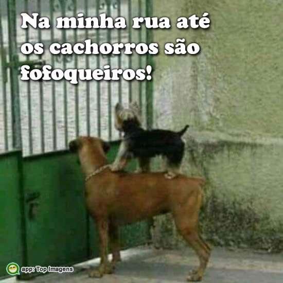 Cachorros fofoqueiros