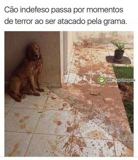 Cão indefeso