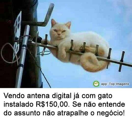 Vendo antena com gato instalado