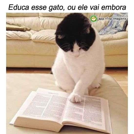 Educando o gato
