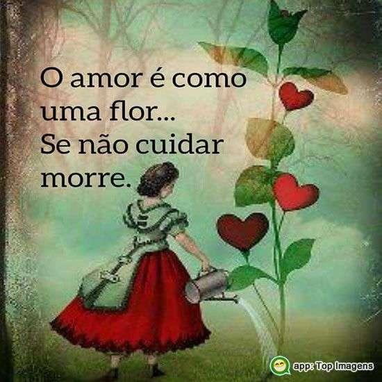 Amor é como uma flor