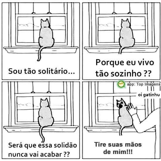 Gato solitário