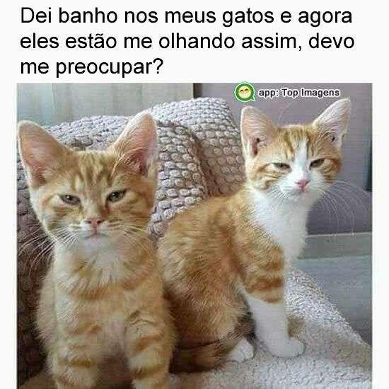 Banho nos gatos