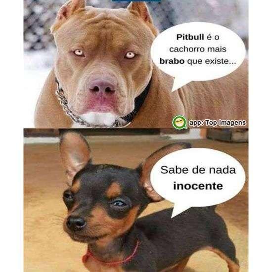 Cachorro mais bravo