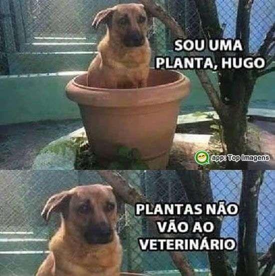 Cachorro planta