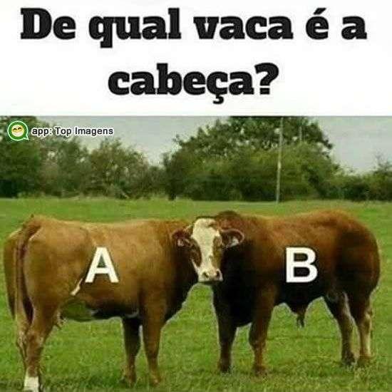Qual vaca?