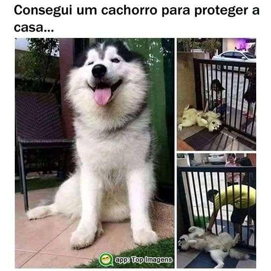 Cachorro para proteger