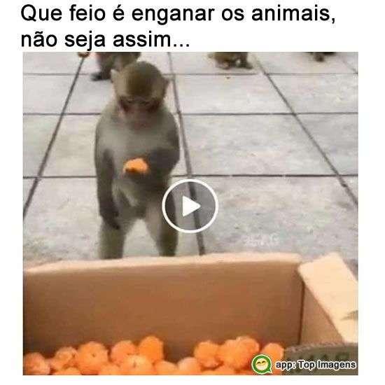 Enganar os animais