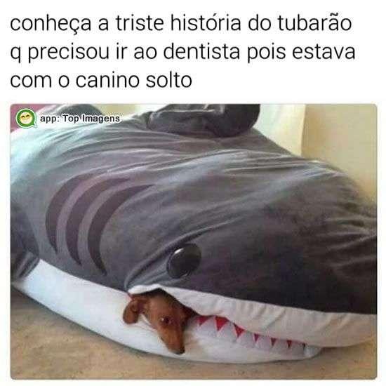 História do tubarão