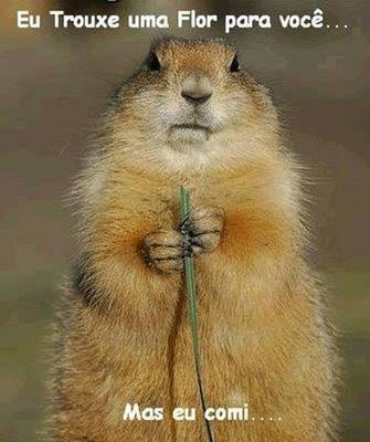 Flor para você