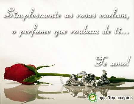 Rosas exalam o perfume